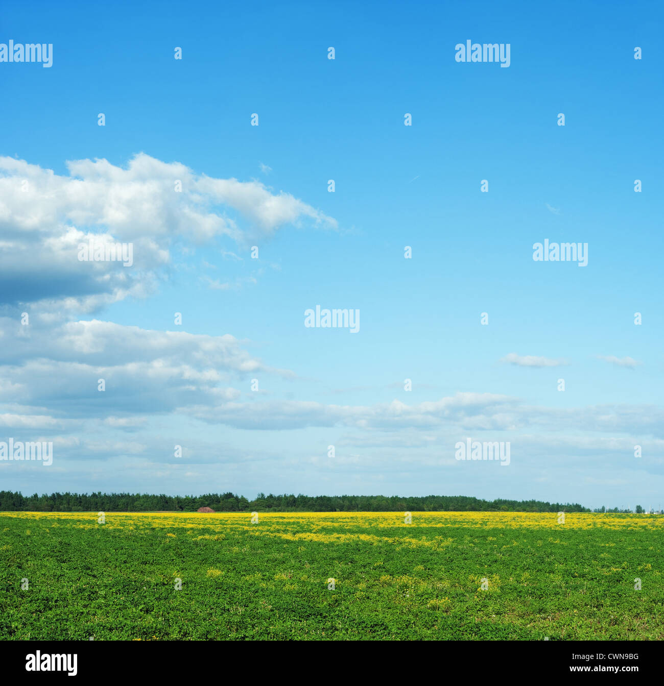 Green field. - Stock Image
