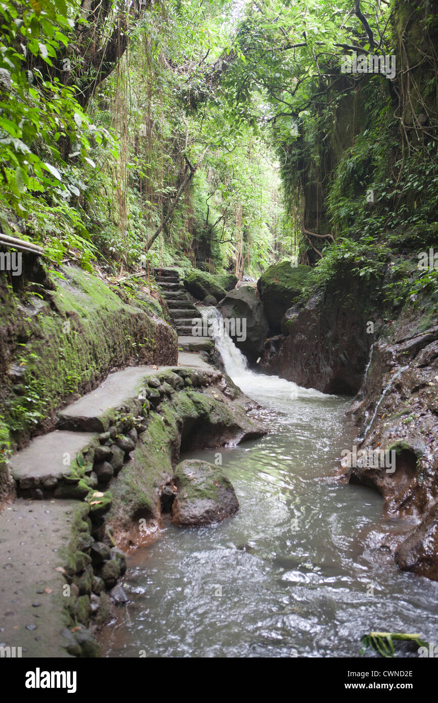 Sacred Monkey forest in the town of Ubud, Bali, Indonesia. - Stock Image
