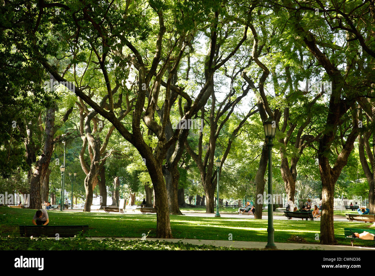 Trees at Plaza San Martin, Retiro, Buenos Aires, Argentina. Stock Photo