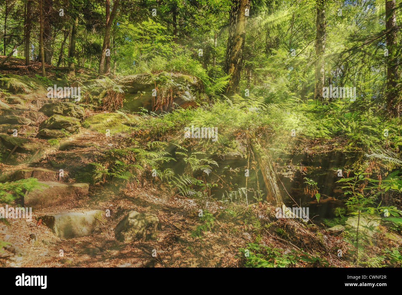 Forest path in summer, the sun shining through the trees, Rosenthal Bielatal National Park Saxon Switzerland, Saxony, - Stock Image