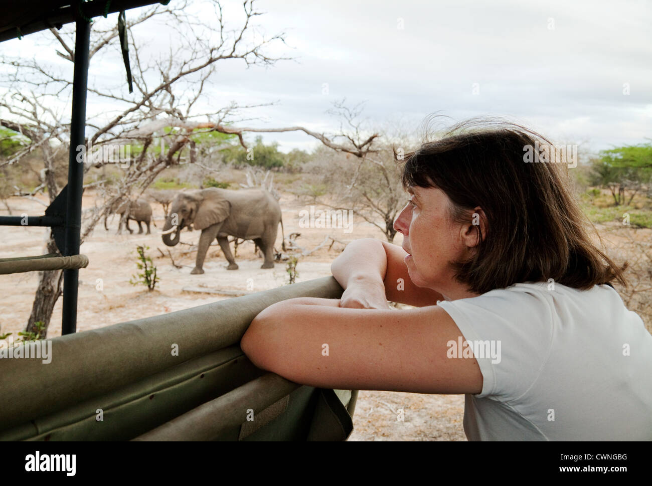 Tanzania safari - A tourist watching elephants from a jeep safari, Selous Game Reserve Tanzania Africa - Stock Image
