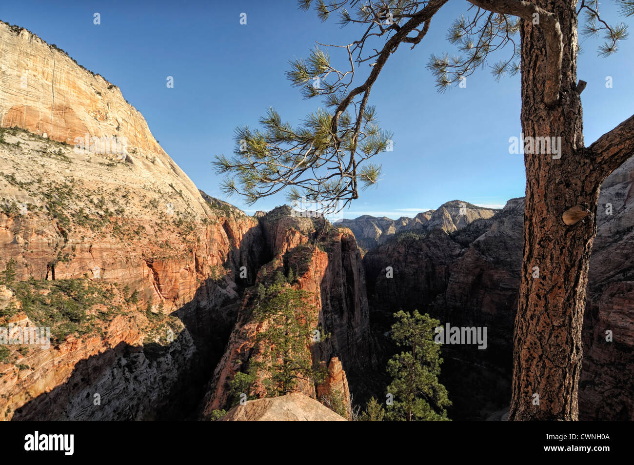 View of Zion Canyon from Angel's Landing Trail Zion National Park Utah USA high height viewpoint hiking hike popular Stock Photo