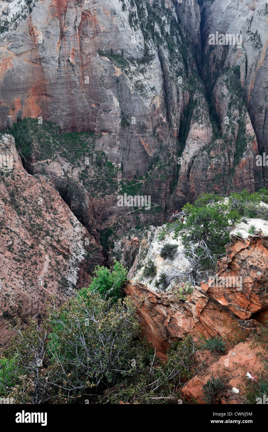 looking down into the Mystery canyon area zion national park plateau utah - Stock Image