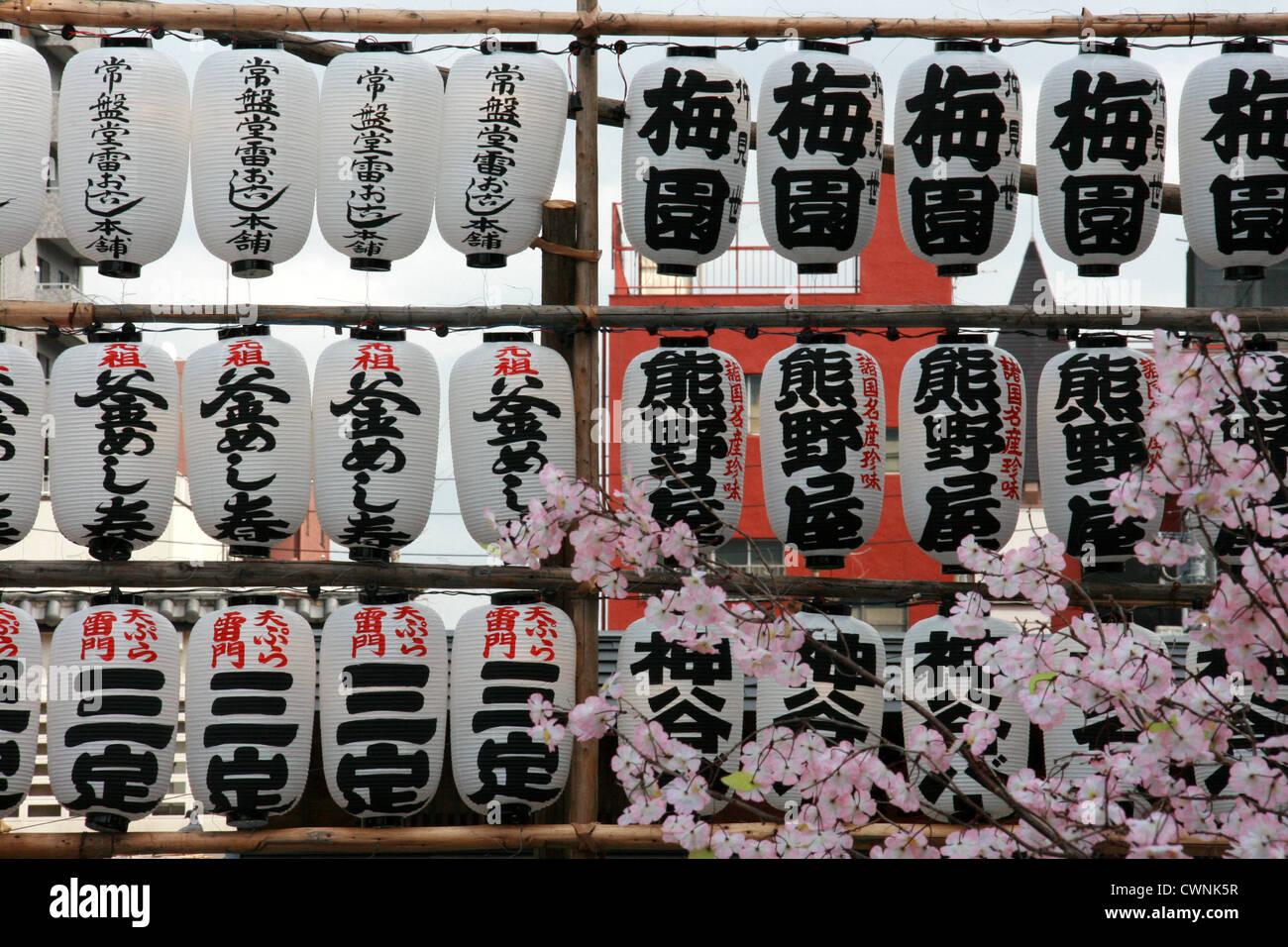 Japanese lanterns with cherry blossom in Asakusa, Tokyo, Japan - Stock Image