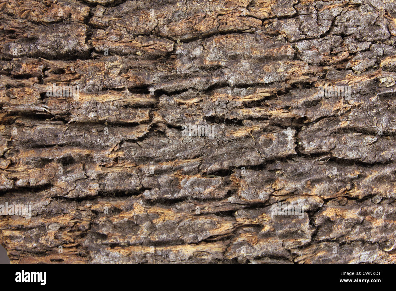 Tree Bark Texture Background - Stock Image