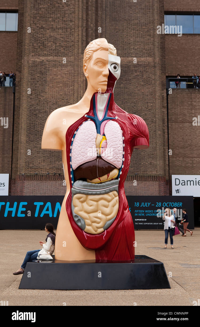Human Body Organs Stock Photos Images Alamy Torso Diagram Statue Of The Outside Tate Modern Gallery On Londons South Bank