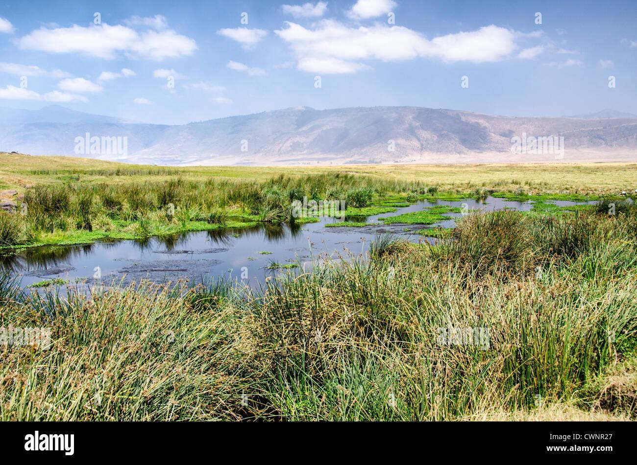 NGORONGORO CONSERVATIONAL AREA, Tanzania - A small watering hole at Ngorongoro Crater in the Ngorongoro Conservation Stock Photo