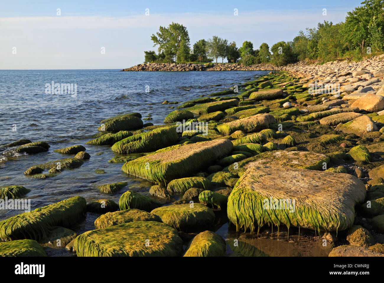 Lake Ontario with green algae on landfill concrete blocks with low water level due to lack of rain and hot weather - Stock Image