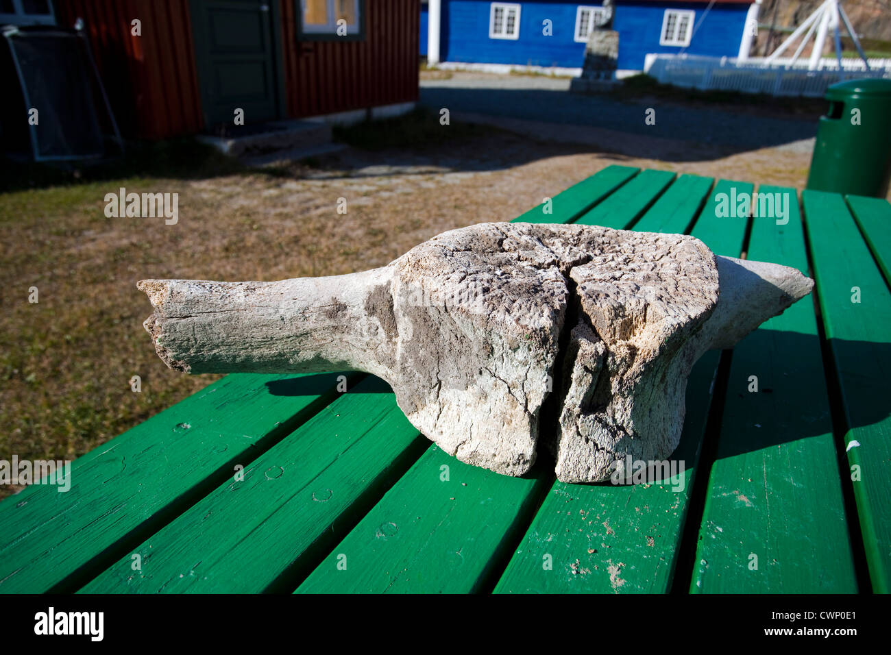 Old whale vertebra lying on a table near the museum in Sisimiut, the second largest town in Greenland - Stock Image