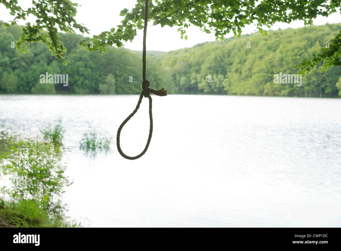 Noose hanging from tree - Stock Image