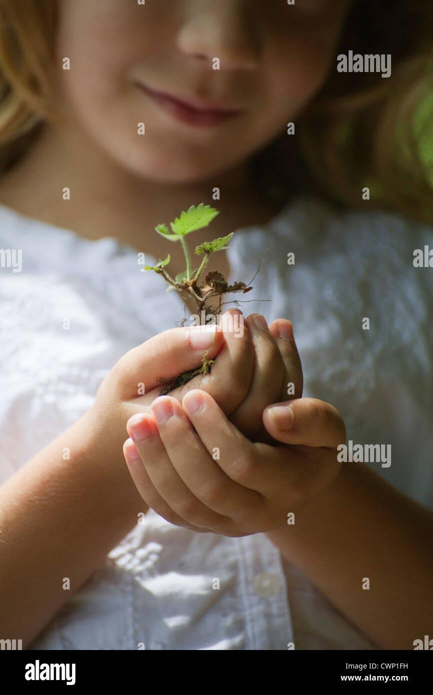 Girl holding seedling, cropped - Stock Image