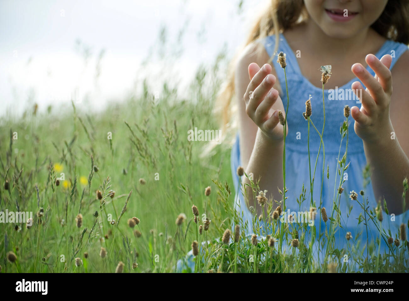 Butterfly on wildflower, girl in background attempting to catch - Stock Image