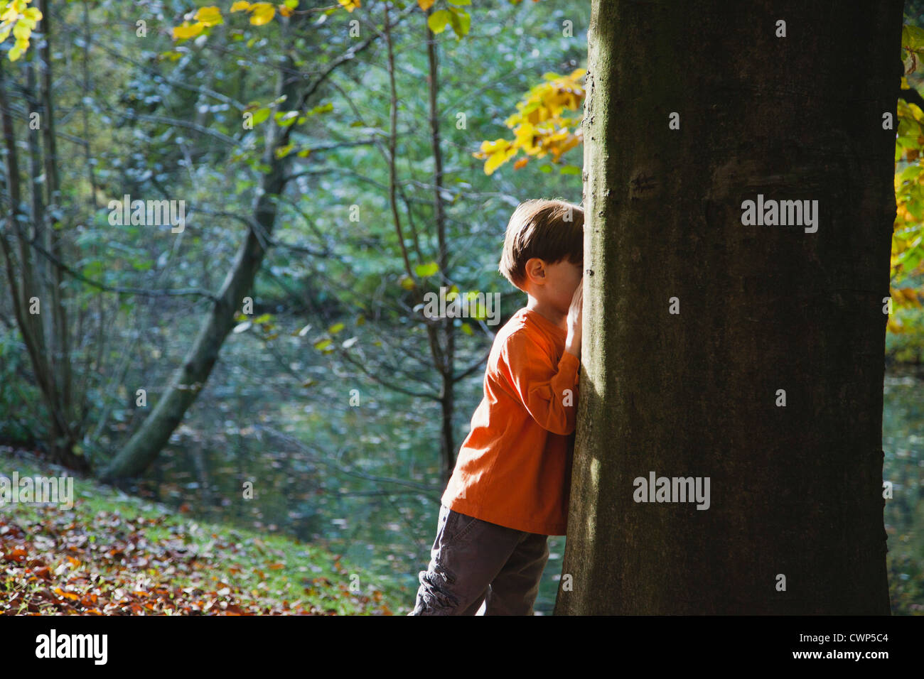 Boy playing hide-and-seek in woods - Stock Image