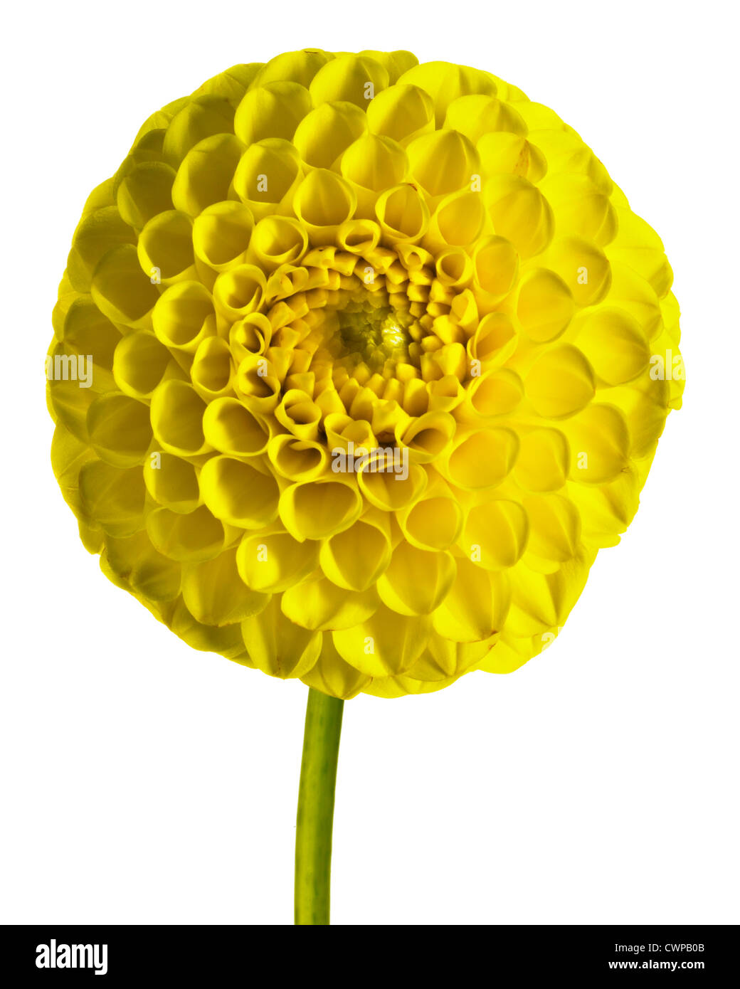 Ball shaped flowers cut out stock images pictures alamy cwpb0b mightylinksfo