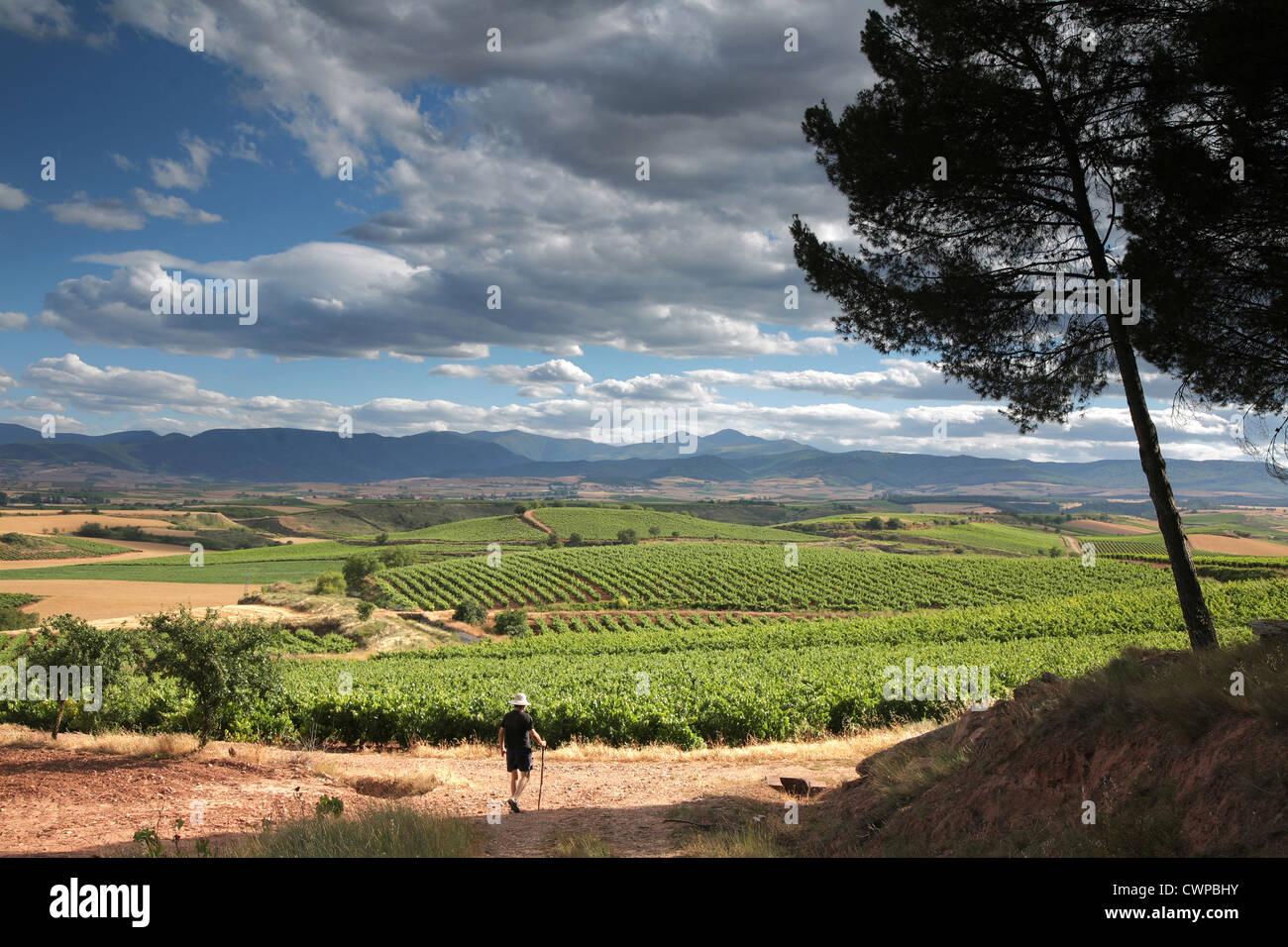 Alesanco landscape,  Camino de Santiago, Rioja wine region, Spain, - Stock Image