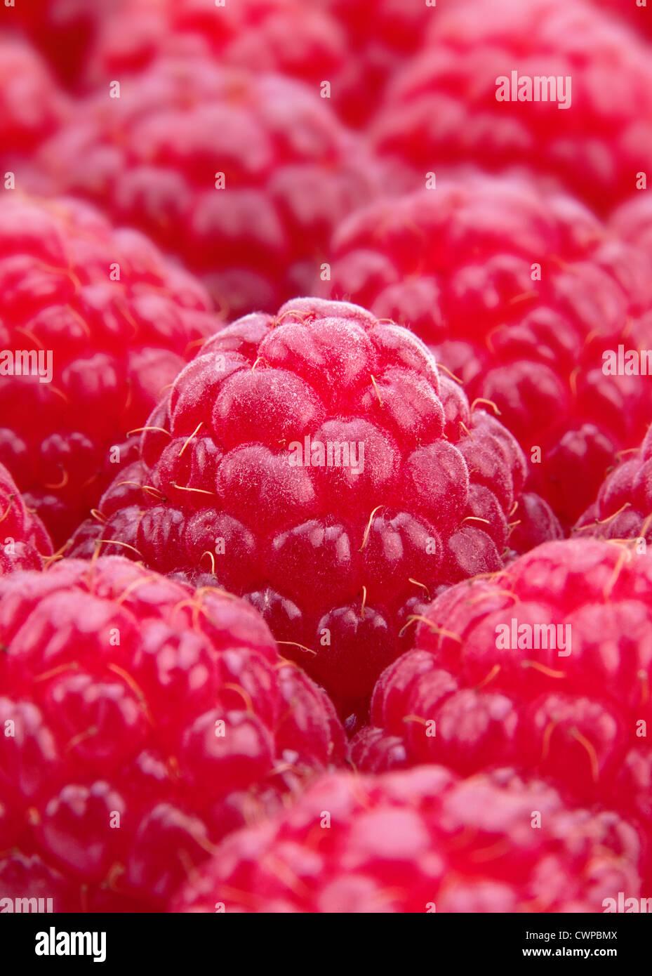 Raspberry fruit macro background - Stock Image
