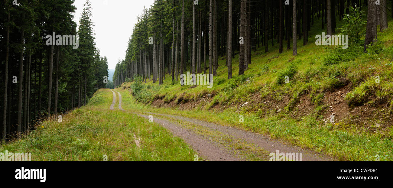 panorama of mountain road in coniferous forest - Stock Image