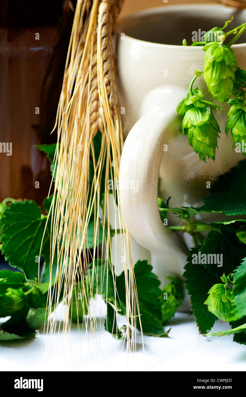 Stein Beer Mug with barley and hops, beer's most important ingredients - Stock Image