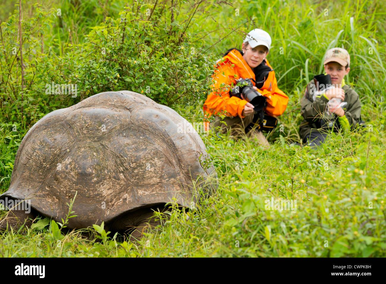 Ecuador, Galapagos, Santa Cruz highlands. Young photographers close to a wild Galapagos dome-shaped tortoise. - Stock Image