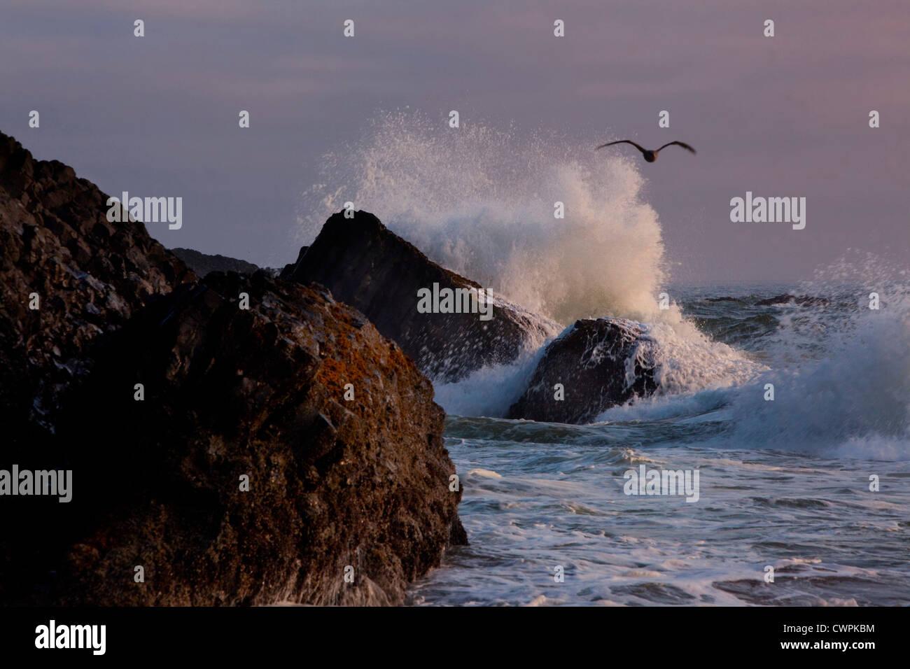 Crashing Waves at Seal Rock Coastline, Oregon, USA - Stock Image