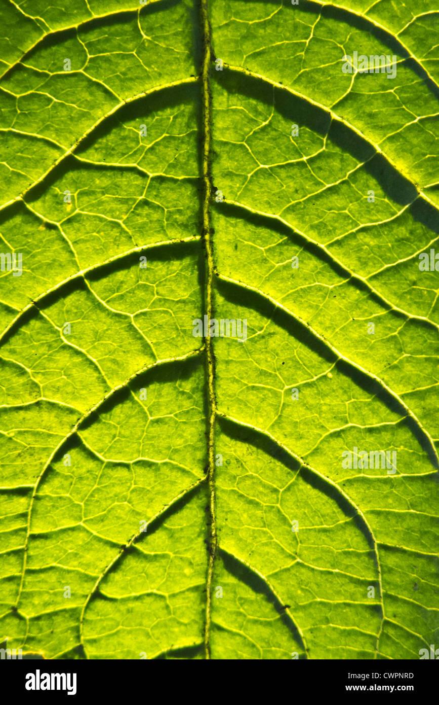 macro of a green leaf Stock Photo