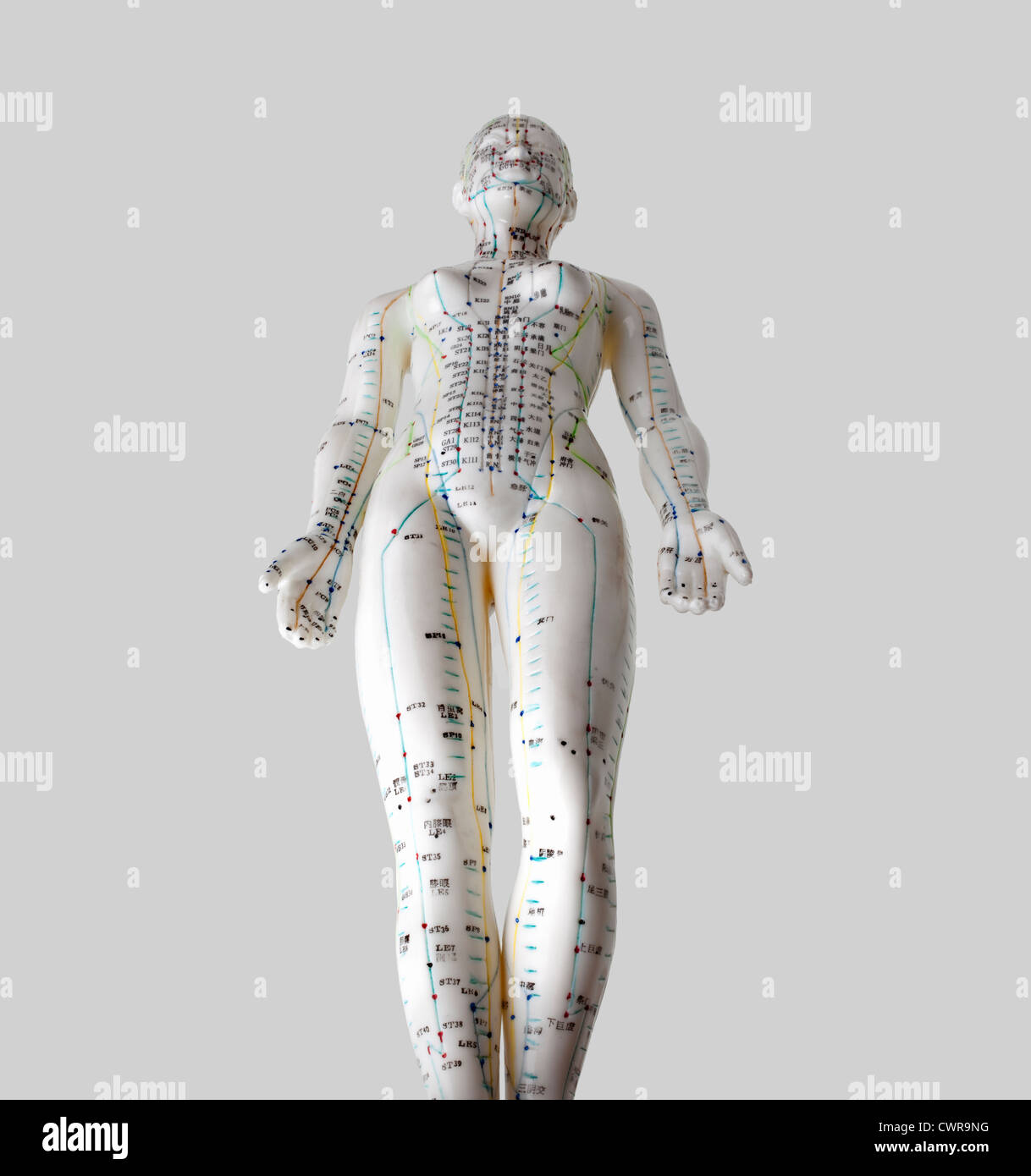 Acupuncture Body Model Stock Photos & Acupuncture Body Model Stock