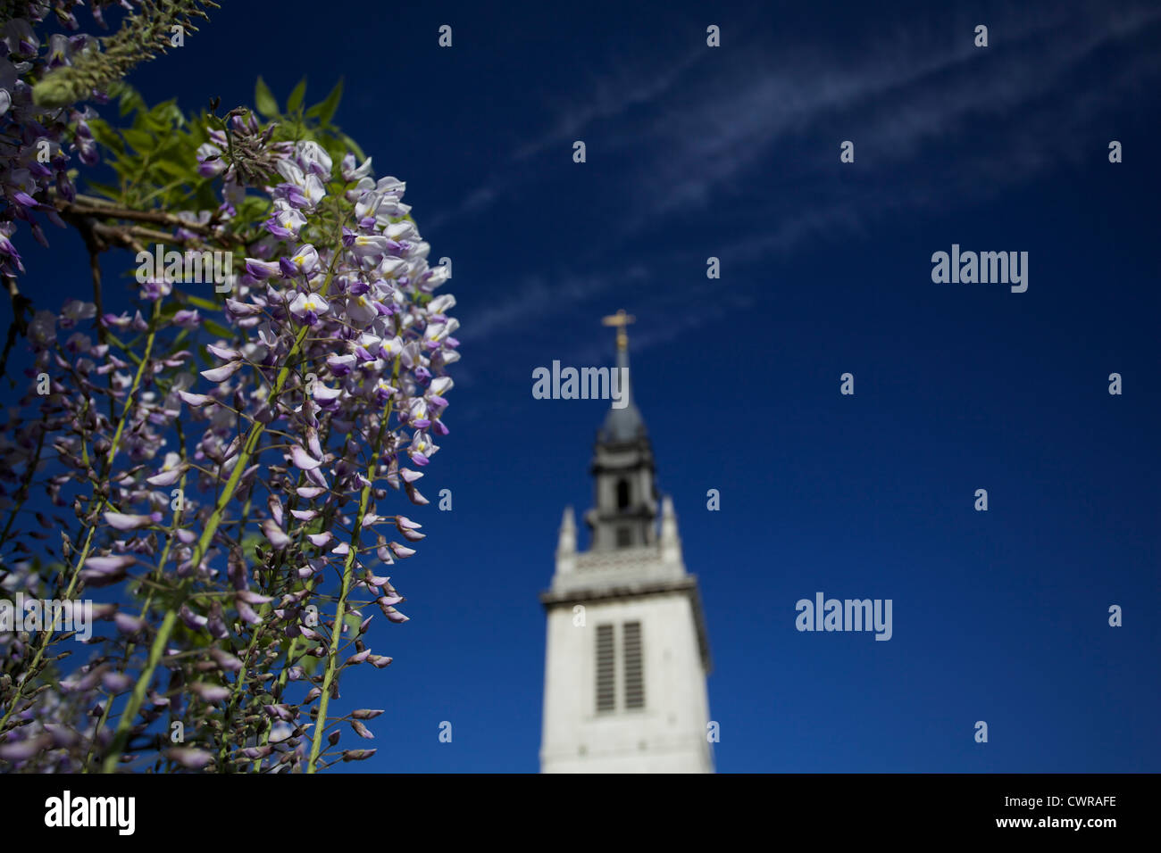 Church tower against a vivid blue sky with purple flowers in the foreground - Stock Image