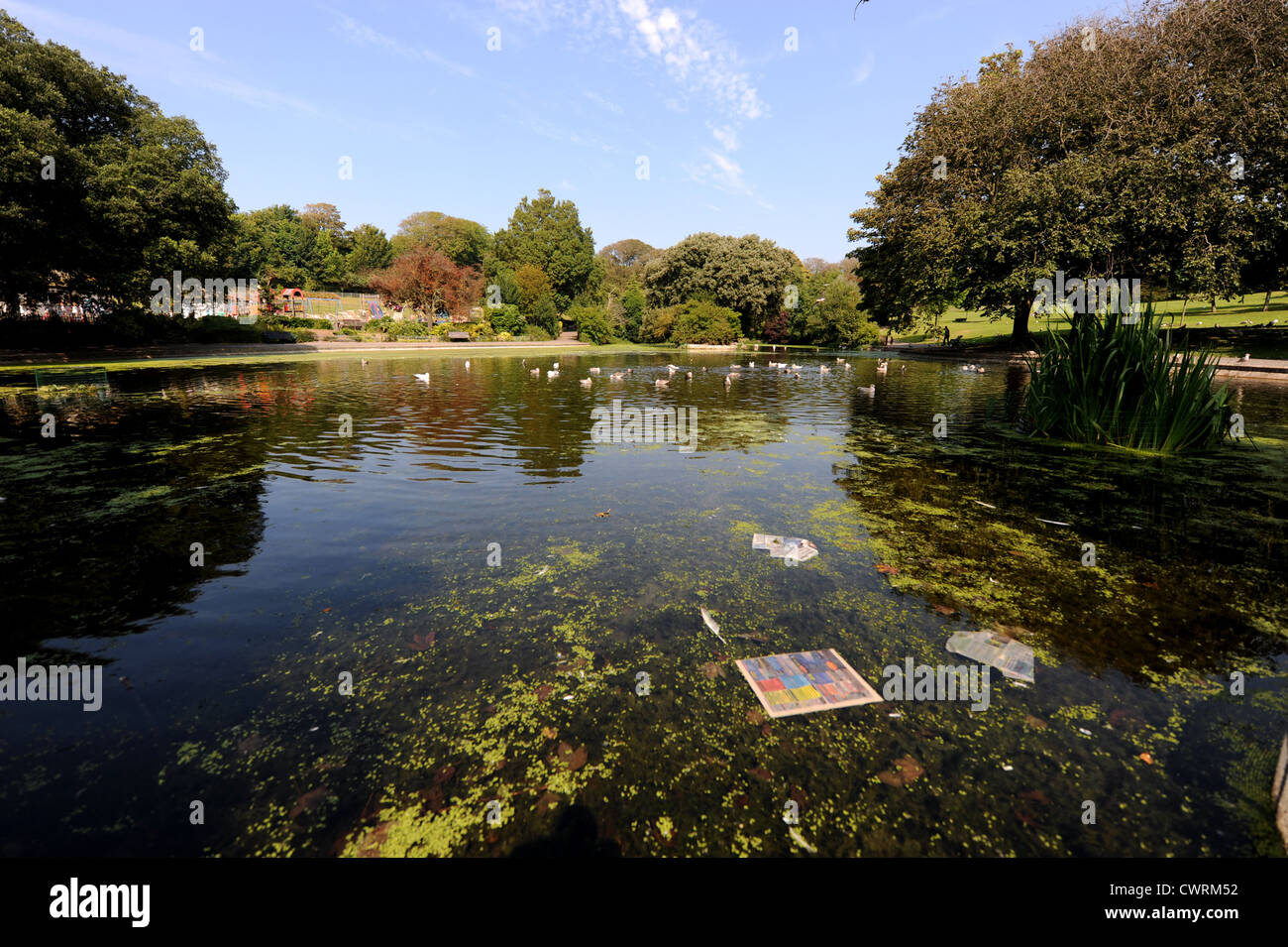 Rubbish In Pond Stock Photos & Rubbish In Pond Stock Images - Alamy