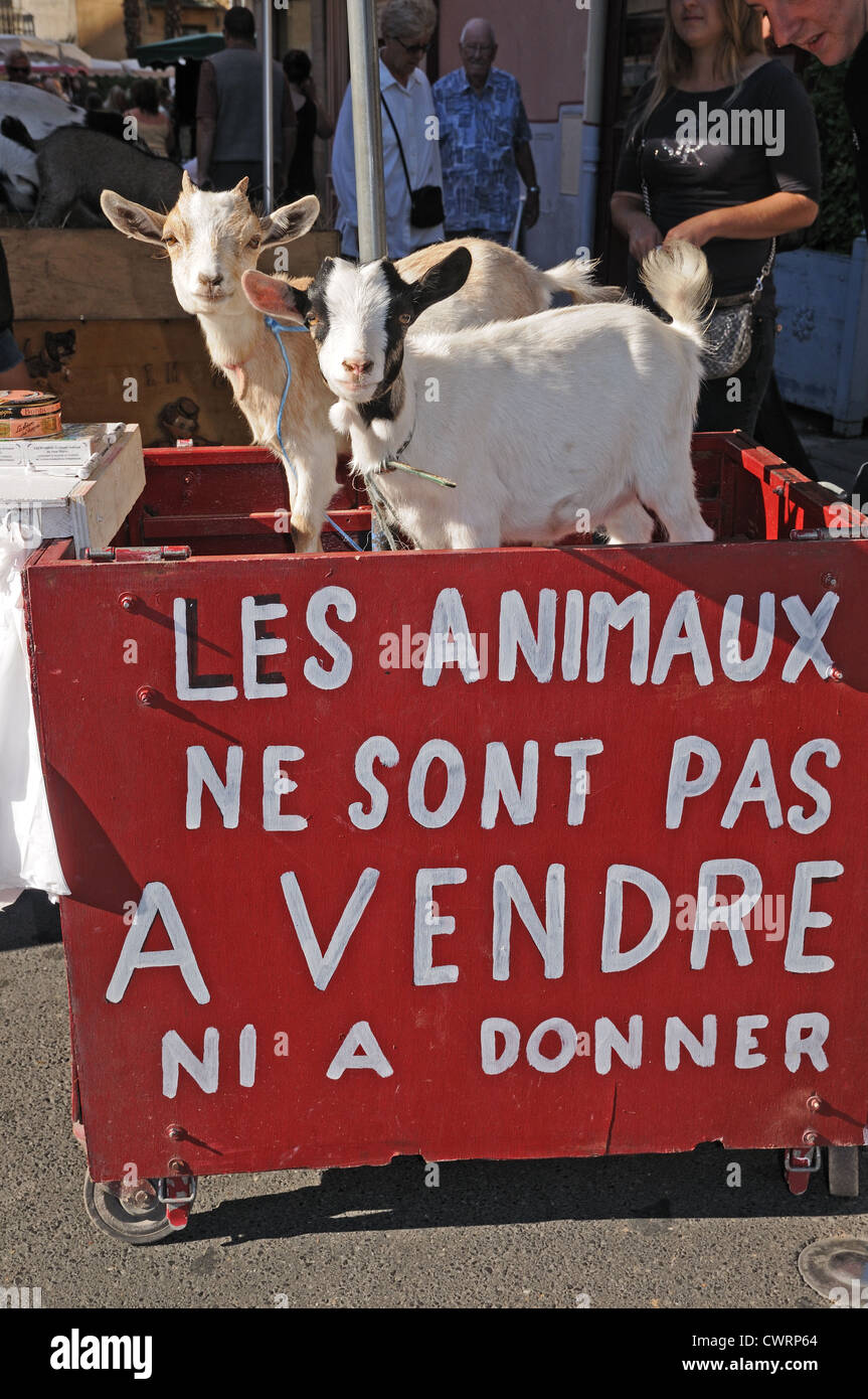 Two goats and sign 'LES ANIMAUX NE SONT PAS A VENDRE NI A DONNER' collect money for animal welfare in Pesenas - Stock Image