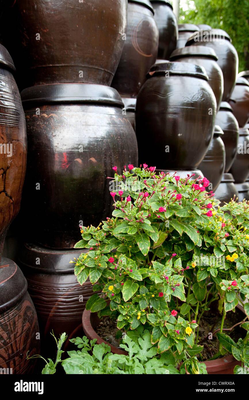 Korean Traditional Jar...