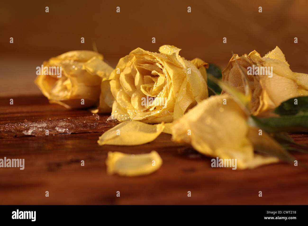Frozen yellow roses on a rustic wooden table Stock Photo