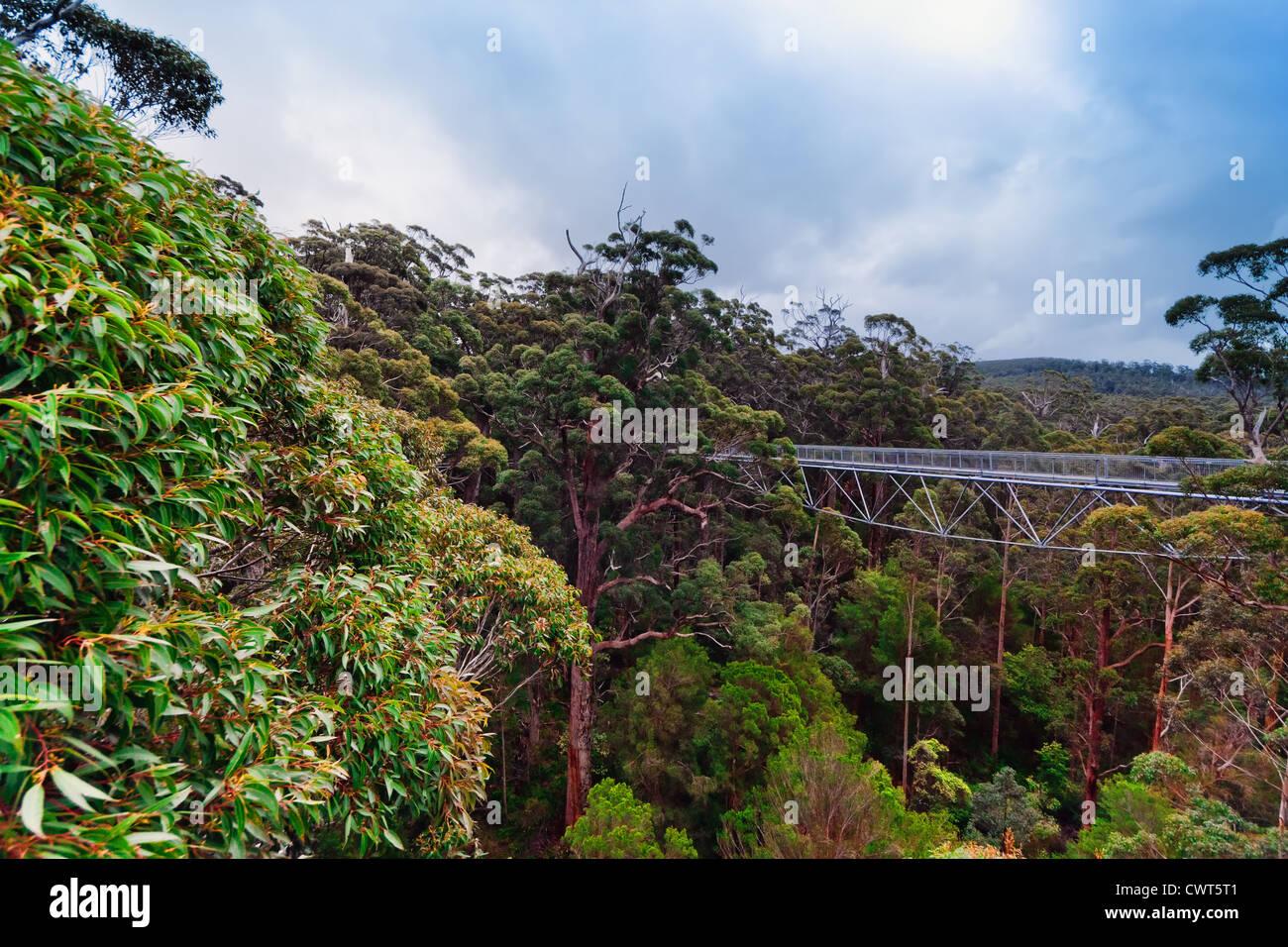 A treetop walk path - In Walpole, Western Australia - Stock Image