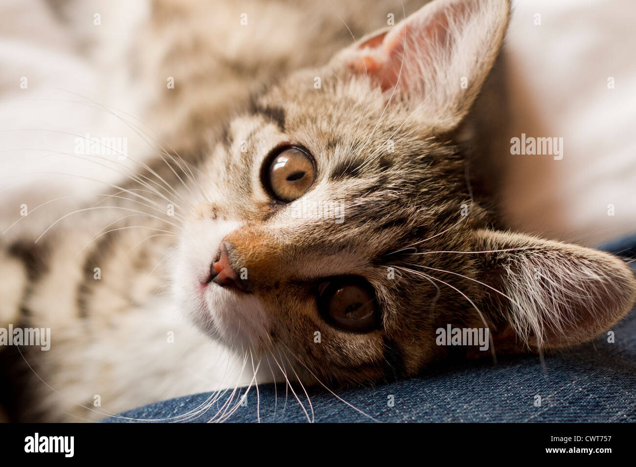 Kitten relaxing and looking thoughtfull - Stock Image