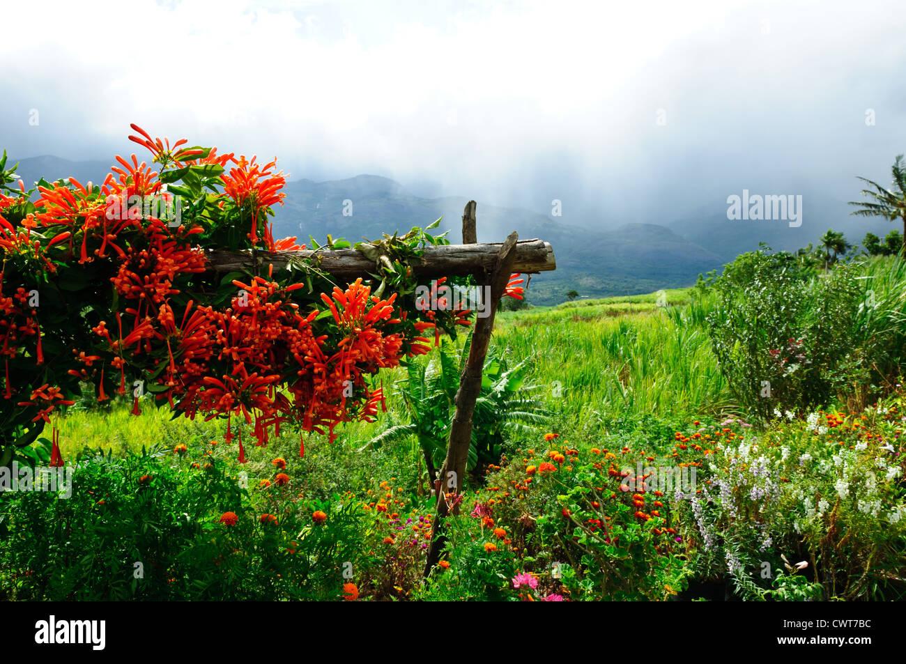 Flower Garden Munnar Kerala India - Stock Image