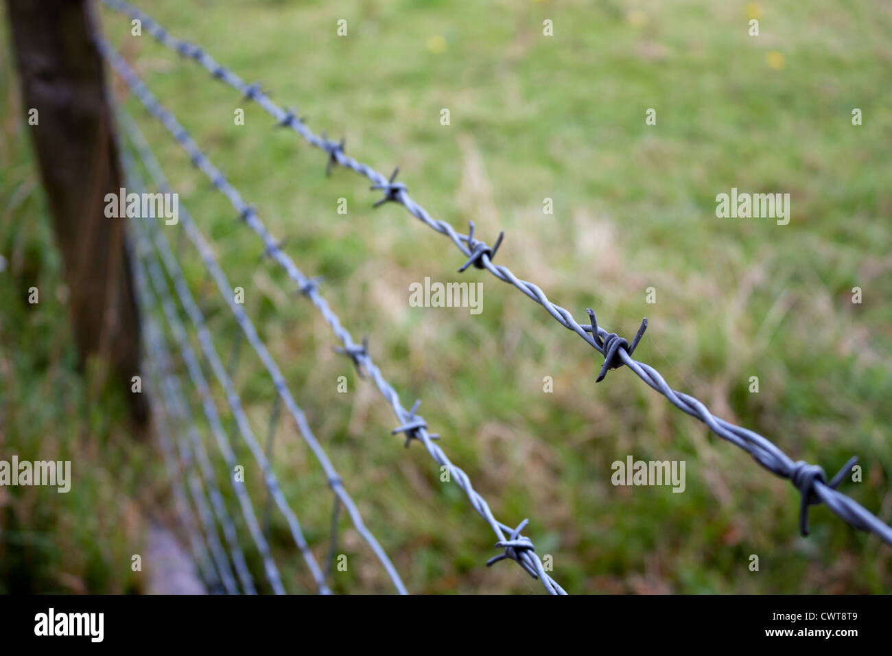 Detail of a barbed wire fence on rural land to contain animals in a field. The focal point is on one barb. - Stock Image