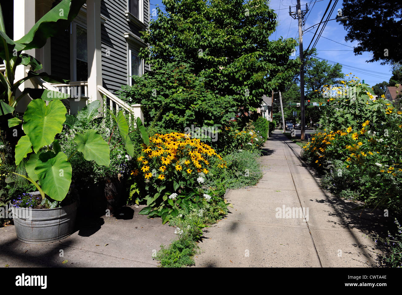 City sidewalk garden instead of lawn in New Haven, CT. - Stock Image