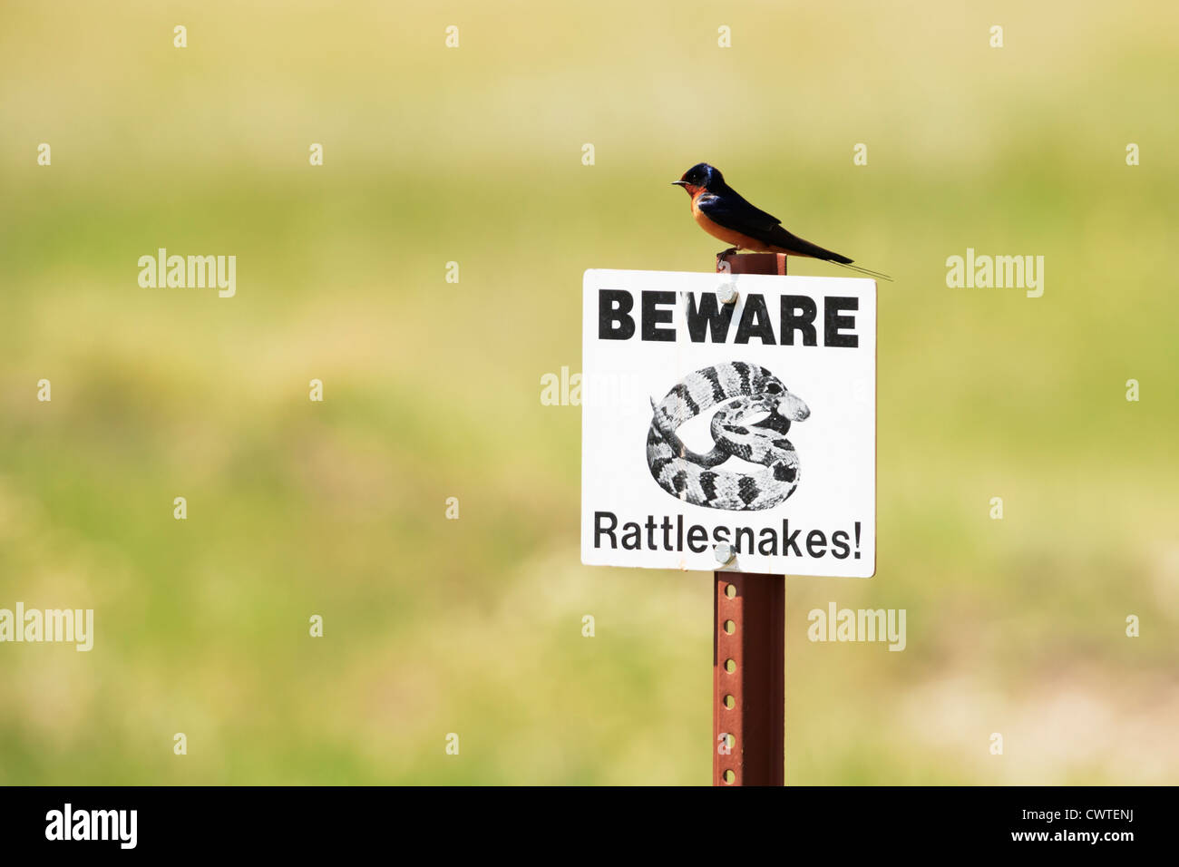 A swallow perches on top of a Beware Rattlesnakes sign in the South Dakota Badlands. - Stock Image