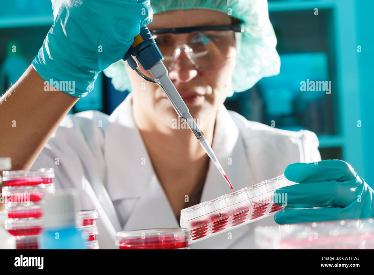 Girl in the microbiology laboratory takes samples pipette - Stock Image
