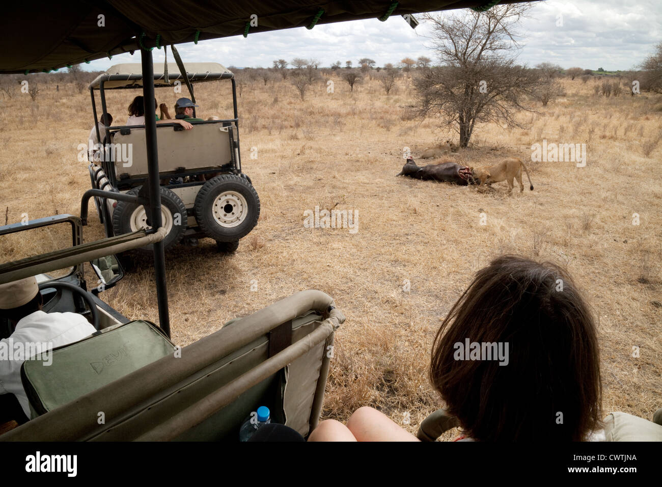 Tourists on a jeep safari watch lions feeding on their kill, Selous game Reserve Tanzania Africa - Stock Image