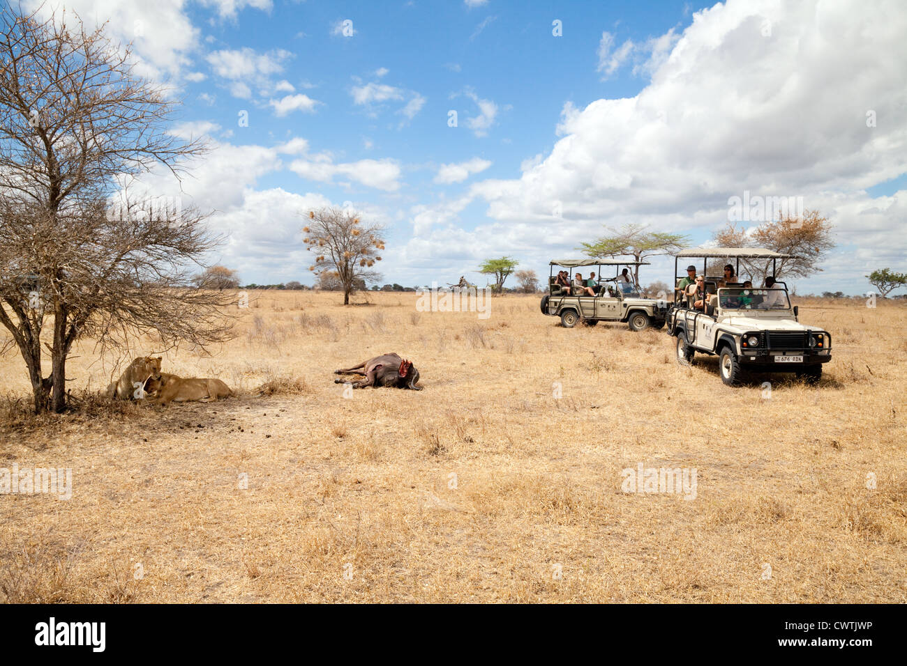 Tourists on an african jeep safari watching lions and their kill Selous Game reserve Tanzania Africa - Stock Image
