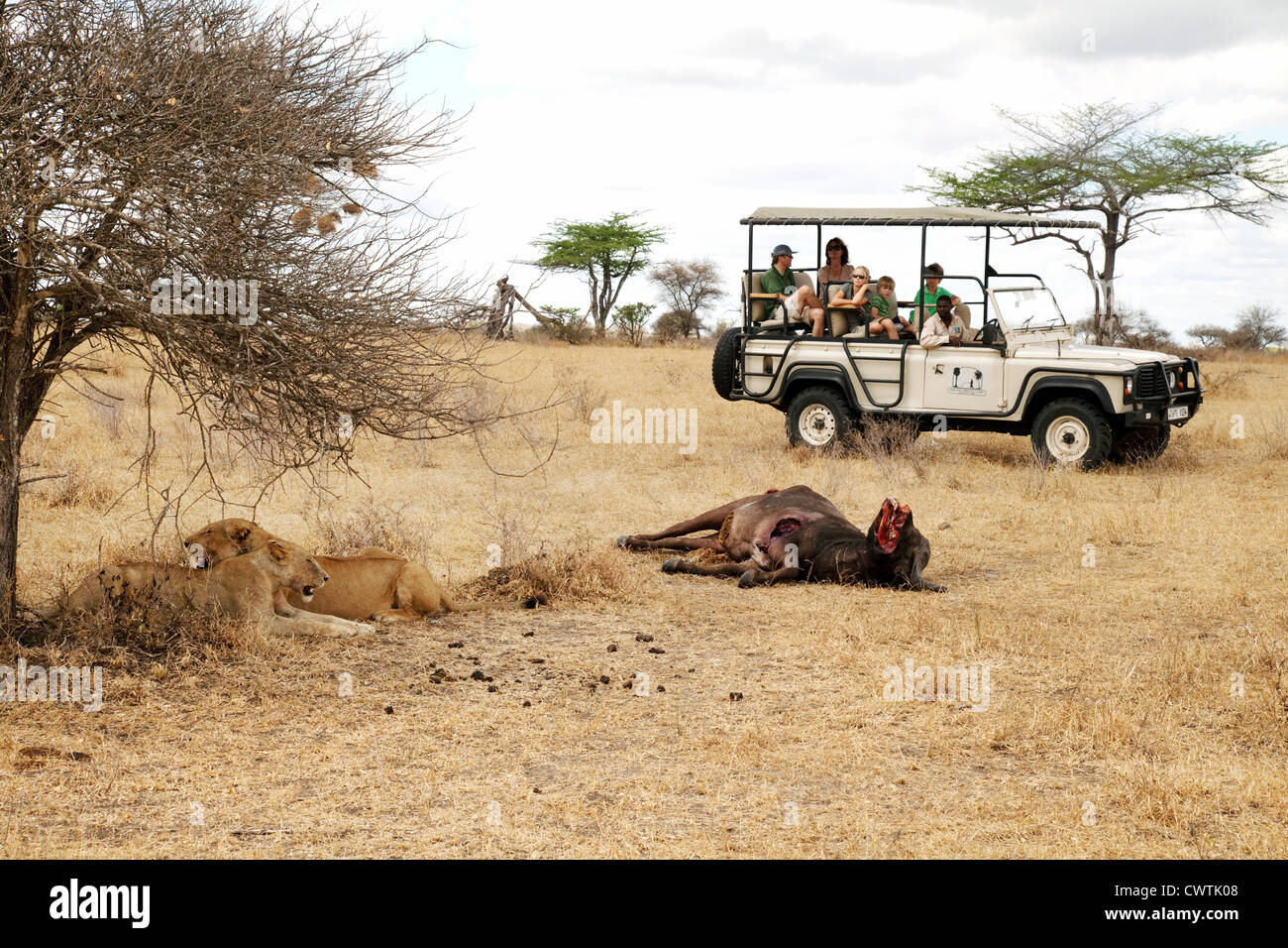 A tourist family on a jeep safari watching lions and their kill, Selous Game reserve Tanzania Africa - Stock Image