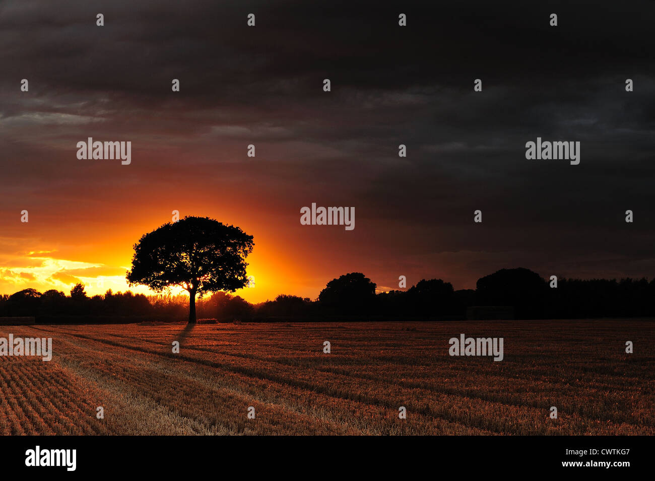 Meon Valley Wheat field. - Stock Image