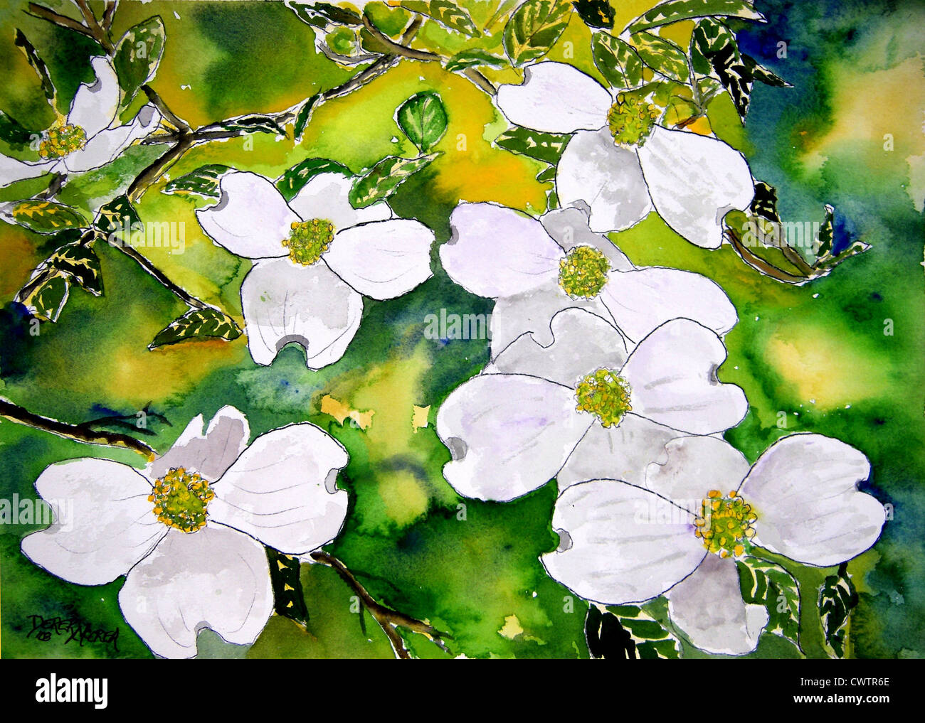 Dogwood Tree Flowers White Flower With Green Leaves And Yellow Stock