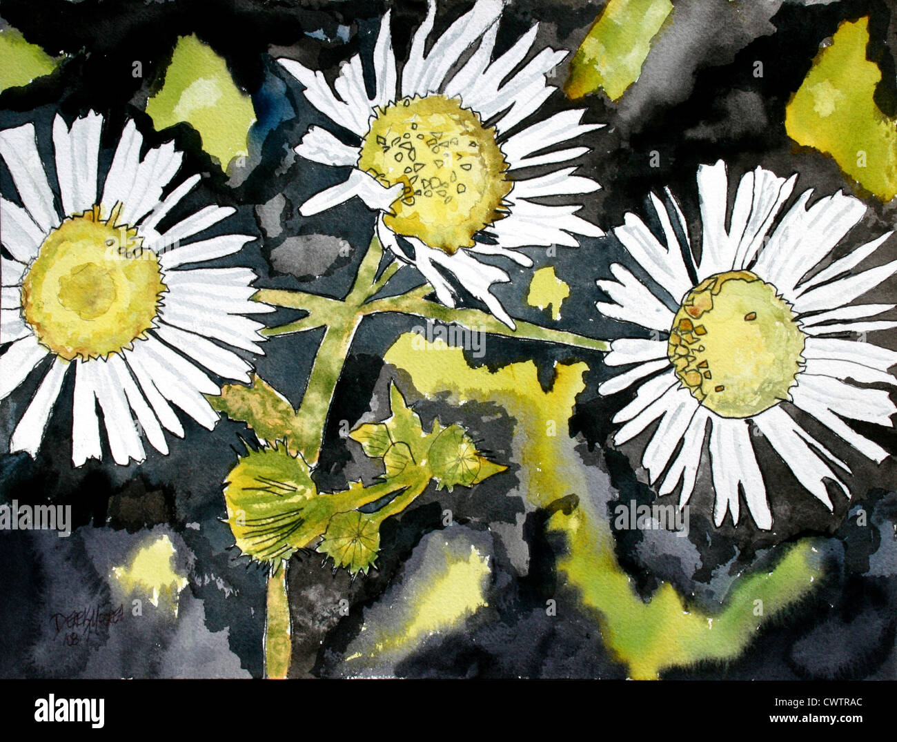 heath aster wildflowers watercolor painting fine modern art impressionistic painting of white and yell flowers with - Stock Image