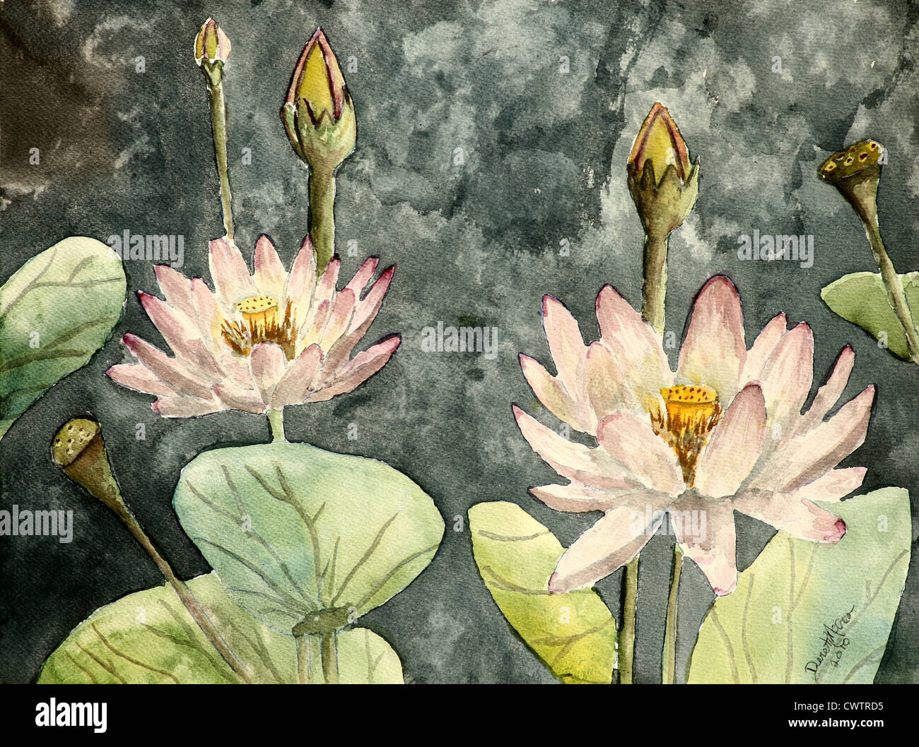 Lotus Flower Watercolor Paintings Fine Art Botanical Modern Art