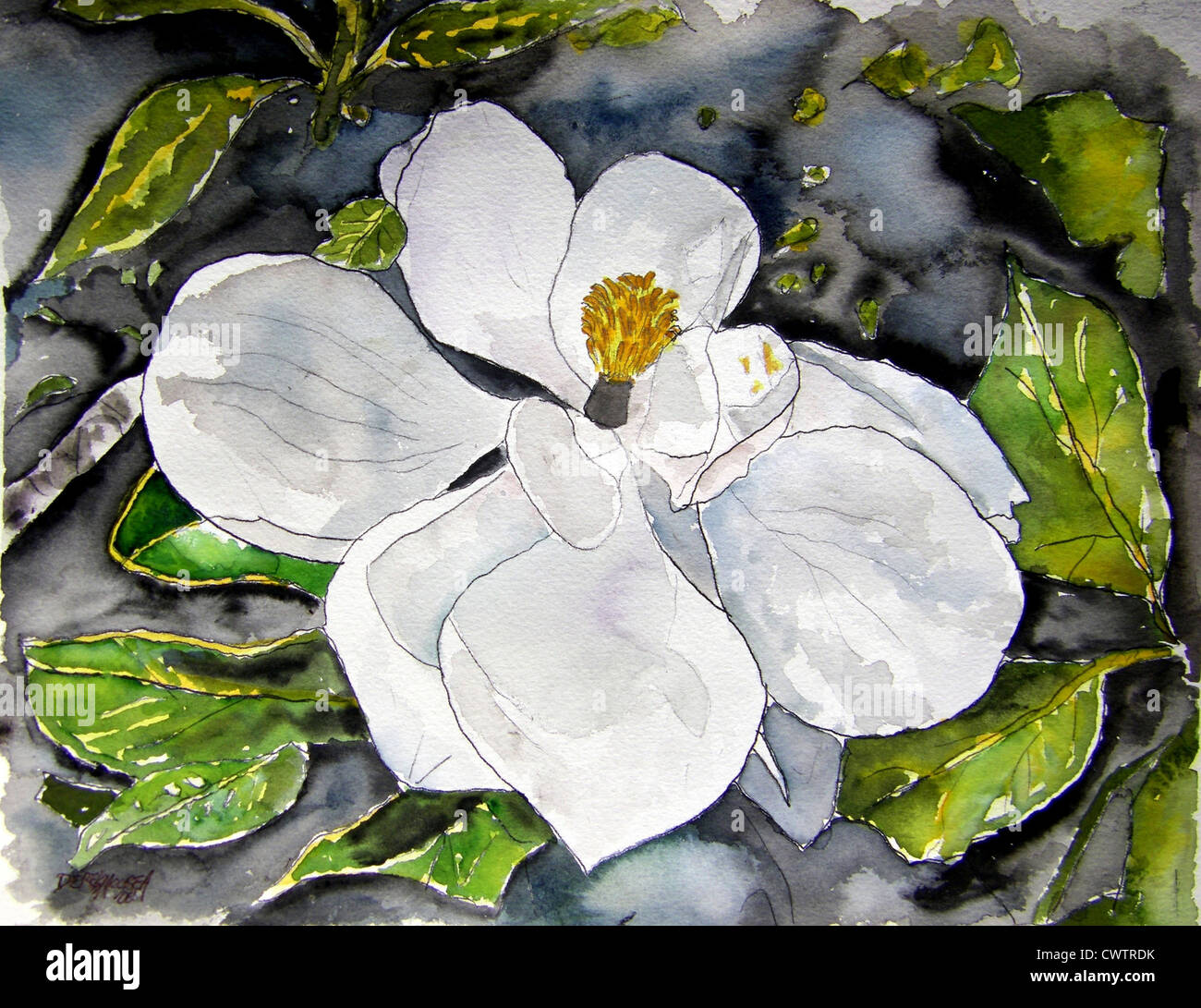 Magnolia Flower Watercolor Painting Stock Photo 50332399 Alamy