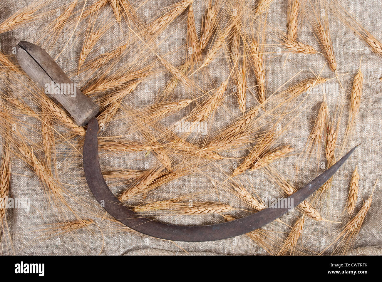Sickle and ears of wheat - Stock Image