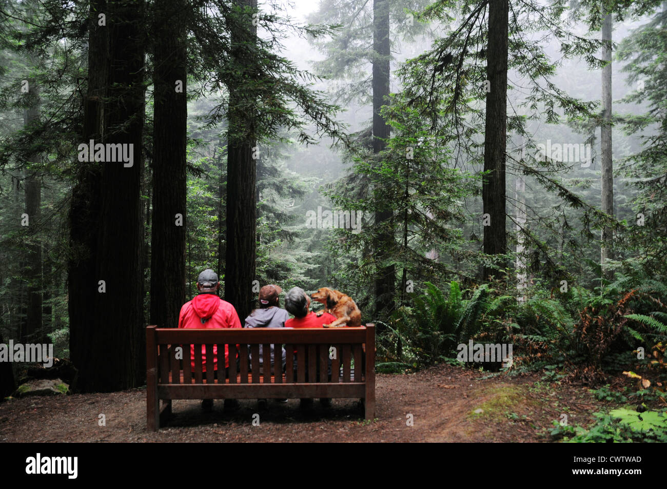 Family of three with dog sitting under tallest trees in the world, the Giant Sequoias in Redwood forests of Northern - Stock Image