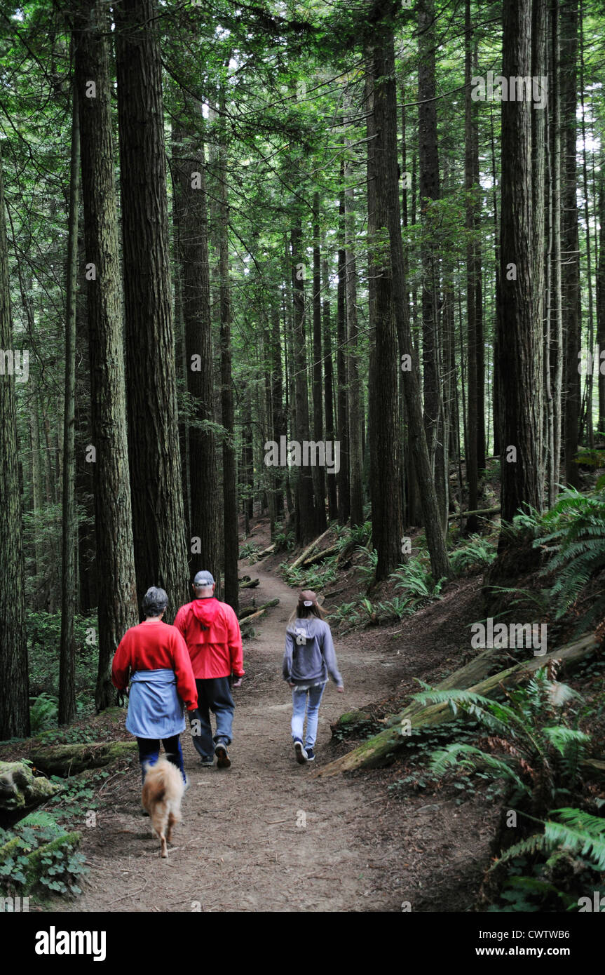 Family with dog walking through the tallest trees in the world, the Giant Sequoias in Redwood forests of Northern - Stock Image
