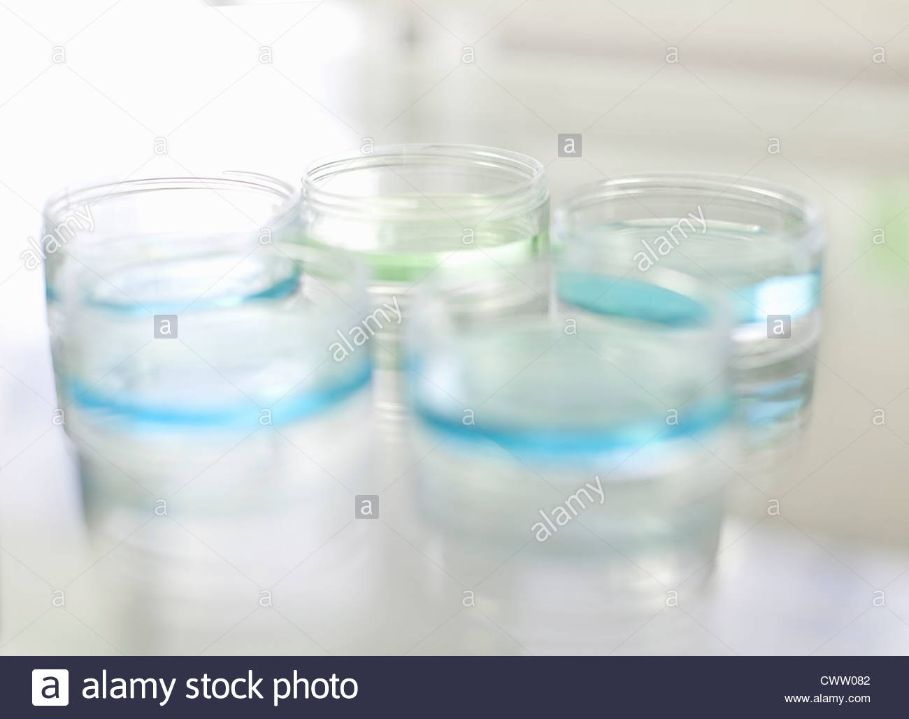 Petri dishes of liquid in lab - Stock Image